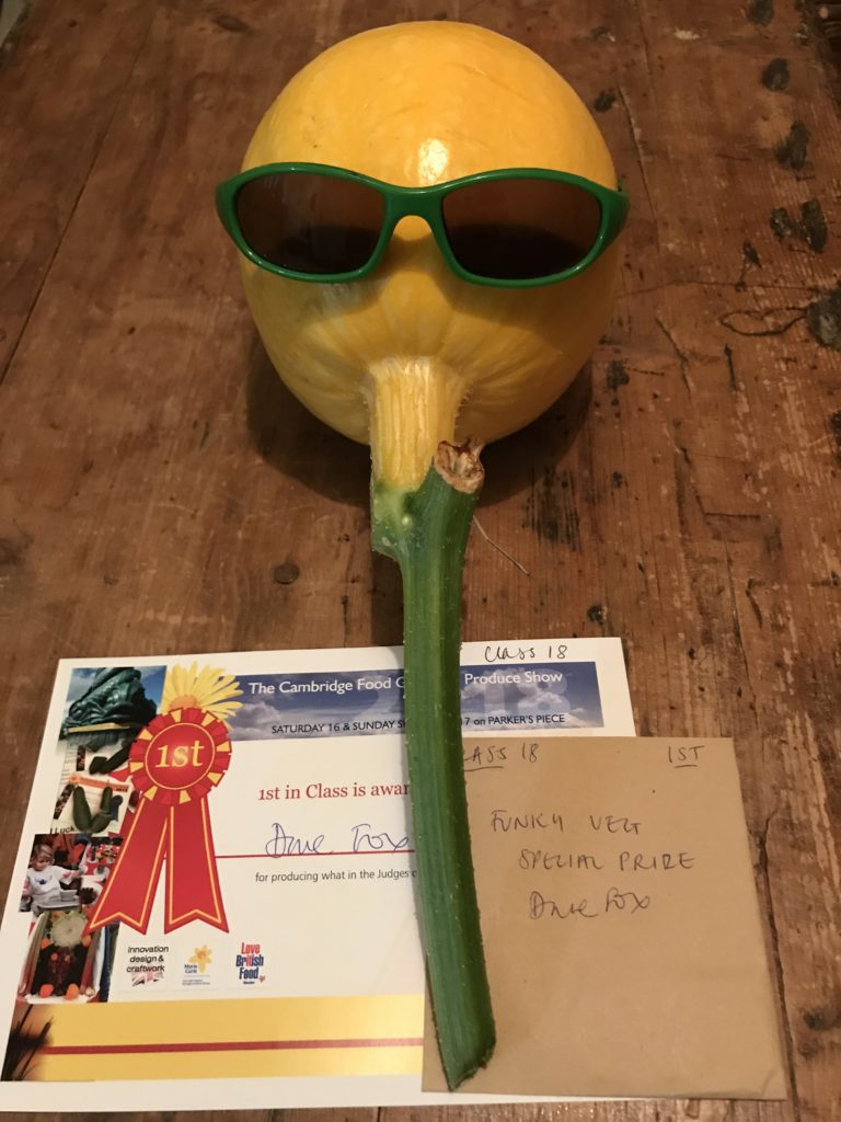 An immature yellow pumpkin with green stalk attached and matching green-rimmed sunglasses